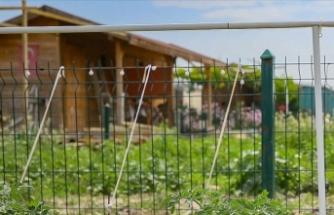Tarım alanlarındaki izinsiz yapılaşmaya hapis cezası getiren teklif yasalaştı