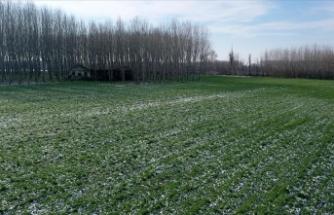 Kar yağışı Trakya çiftçisinin yüzünü güldürdü