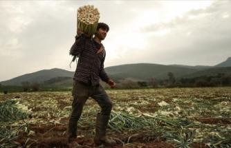Tarımsal girdi fiyat endeksi Kasım 2020'de arttı