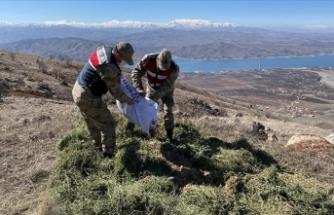 Elazığ'da jandarma yaban hayatı için doğaya yem bıraktı