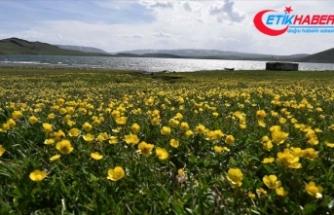 Nevruz'un habercisi son cemre bugün toprağa düşüyor