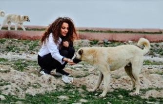 Genç ressam yaptığı resimleri sosyal medyadan satarak sokak hayvanlarını besliyor