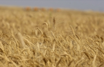 21. yüzyılda iklim değişikliği, kuraklık ve kıtlık gibi faktörler insanları alışkanlıklarını değiştirmeye itti