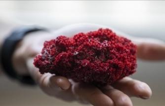 Aktarlarda satılan 'kardeş kanı' bitkisi, hayati tehlike yaratıyor