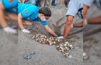 Antalya'da 2020 yılında 4 bin 853 yuvadan 204 bin 591 yavru caretta denizle buluşturuldu