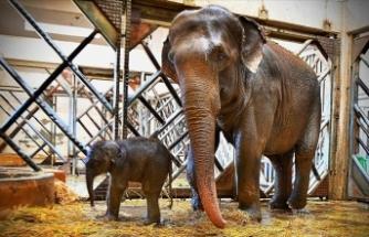 İzmir Doğal Yaşam Parkı'nda yavru fil sevinci