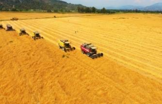 TİGEM'de yerli tohum buğdayın hasadından yüksek verim elde edildi