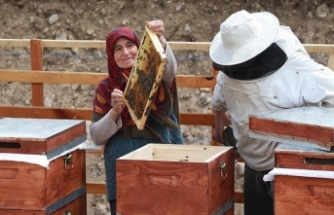 Zengin bitki örtüsüne sahip Anzer Yaylası'nda arıcıların bal mesaisi başladı