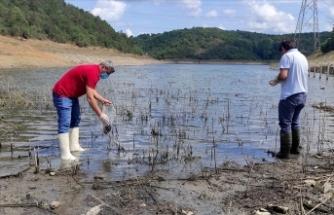 Alibeyköy Barajı'nda kıyıya vuran balıklardan ve sudan numune alındı