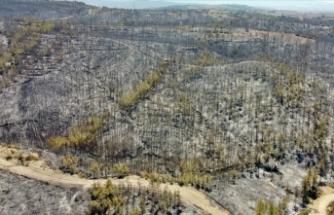 Dünyadan Türkiye'ye yangın felaketi için dayanışma mesajları geldi