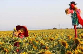 Tekirdağ'da sarıya bürünen ayçiçeği tarlalarında foto safari düzenlendi