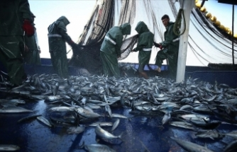 Hataylı balıkçıların Doğu Akdeniz'deki av mesaisi başladı
