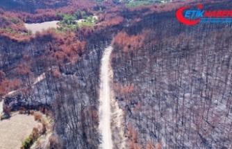 Adana ve Osmaniye'de yanan ormanlık alanlarda 4 milyon fidan toprakla buluşacak