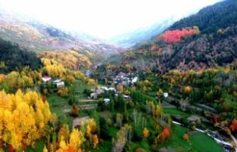Artvin'de sonbaharın gelişiyle renk cümbüşü yaşanıyor