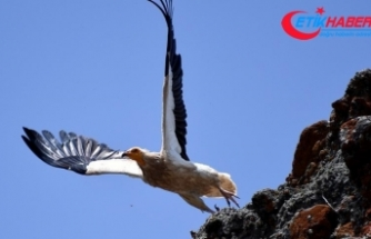 Avrupa'daki her 5 kuştan biri yok olma tehlikesiyle karşı karşıya