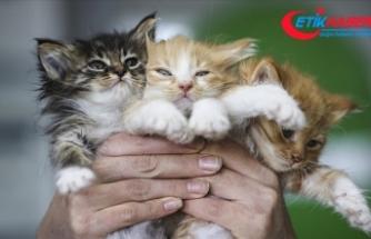 Bitkisel ürünler hayvanların tedavisinde de kullanılıyor