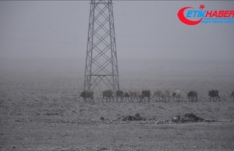 Erzurum ve Kars'ta kar yağdı, Palandöken beyaza büründü