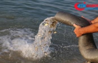 Göl ve göletlere 5 milyon yavru balık bırakılacak