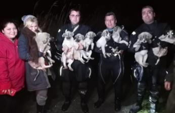 Mahsur kalan 10 köpek botla kurtarıldı