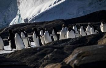 Bilimsel araştırma ekiplerinin gözdesi: Antarktika