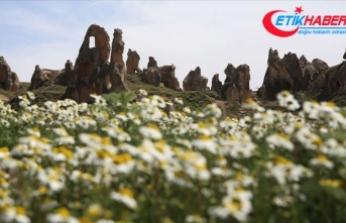 Kapadokya 'çiçek açtı'