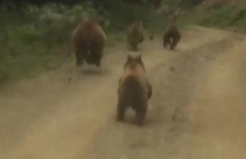 Yayla dönüşü önlerine çıkan ayı ailesini görünce şaşkınlık yaşadılar