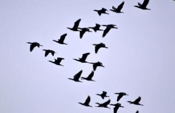 Veterinerlerden 'ölü kuşlara dokunmayın' uyarısı