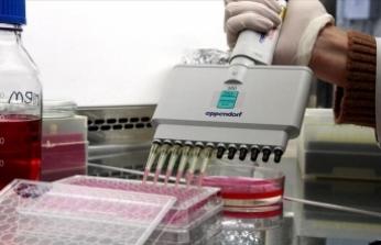 Sığırlarda 'Afrika hastalığı'na karşı yerli aşı geliştirildi