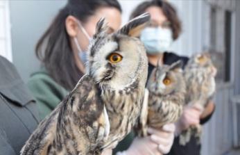 Öksüz kalan orman baykuşlarına öğrenciler sahip çıktı