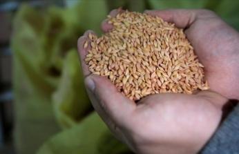Trakya'nın yerli tohumları Azerbaycan'da, işgalden kurtarılan bölgelerde filizlenecek