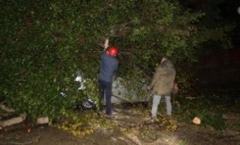 Rize'de 2 araç kökünden kopan ağacın altında kaldı