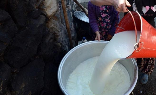 Toplanan inek sütü miktarı ocakta azaldı