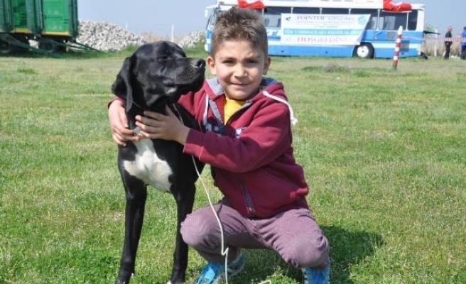 Aydın'da 'köpek güzellik yarışması'