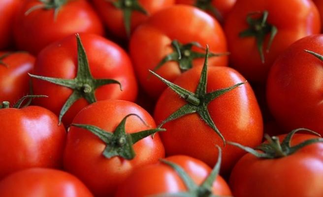 'Domates ihracatımız kısıtlamaya rağmen yüzde 44 arttı'