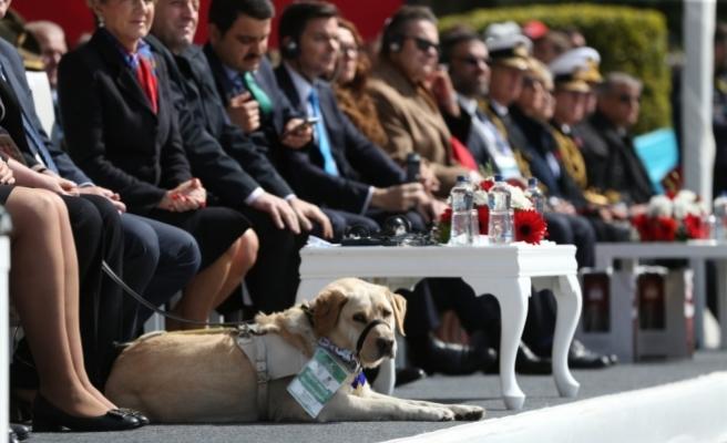 """Rehber köpeğe akreditasyona büyükelçiden """"tweet""""li teşekkür"""