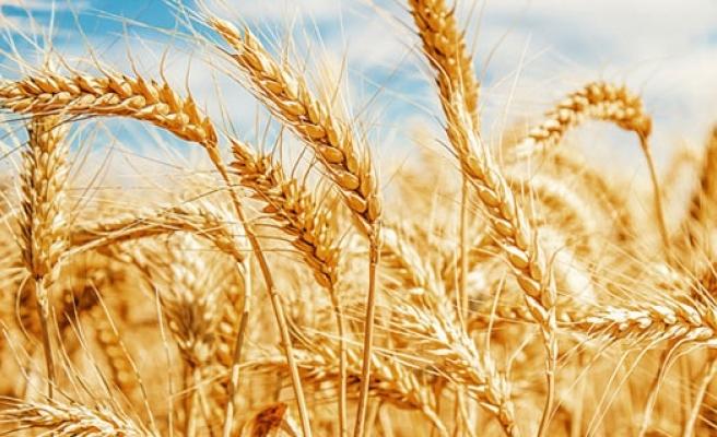 Rusya'nın Türkiye'ye buğday ihracatı yüzde 292 arttı