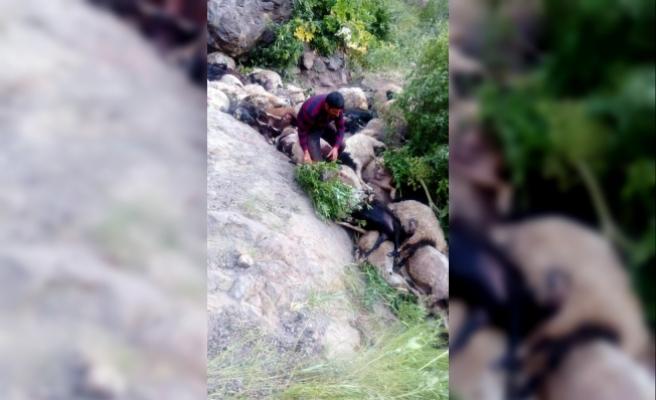 Muradiye'de kayalıklardan atlayan 80 koyun telef oldu