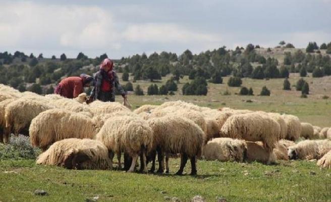 Türkiye FAO Ülke Programlama Çerçevesi kapsamında 5 yıllık işbirliği anlaşmasını imzaladı