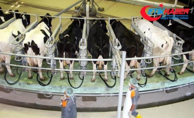 Toplanan inek sütü miktarı haziranda azaldı