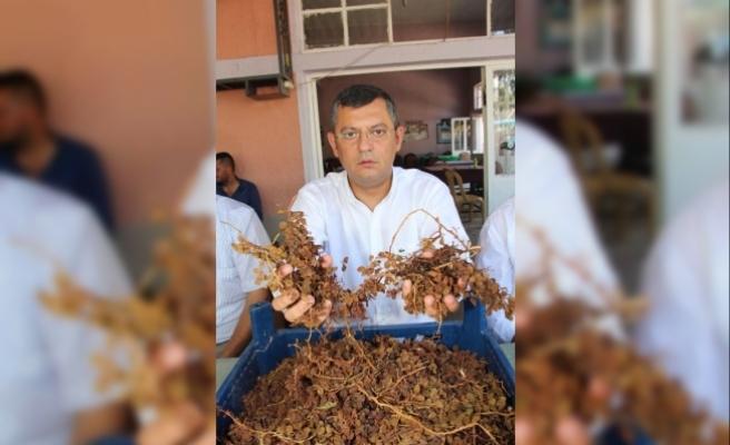 CHP'li Özel'den, Bakan Fakıbaba'ya kuru üzüm fiyatı tepkisi
