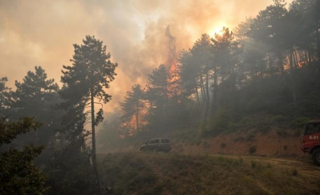 Sakarya'da orman yangını