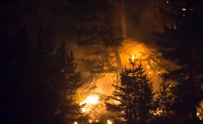 Kütahya'daki orman yangınının ilerlemesi durdu