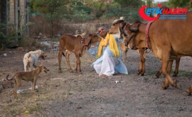 Hintli Adam, Sığır Sürüsüyle Yaşamak İçin Ailesini Terk Etti