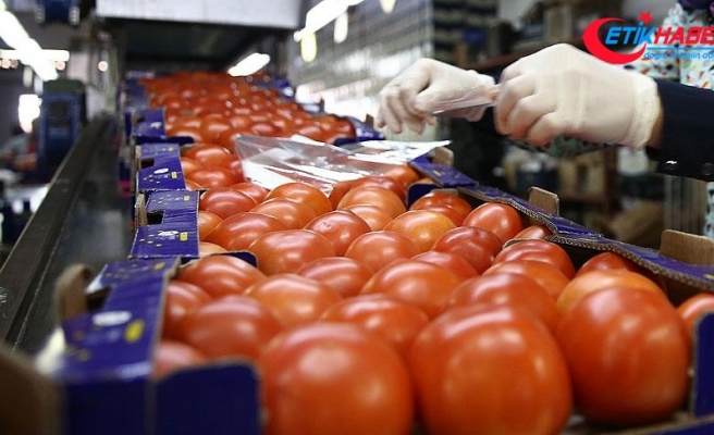 Rusya 5 Türk şirketinden daha domates alacak