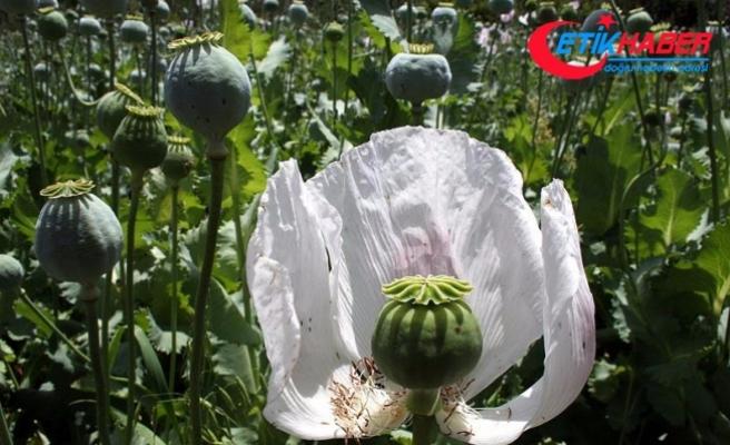 BM: Afganistan'da Afyon üretimi rekor düzeyde