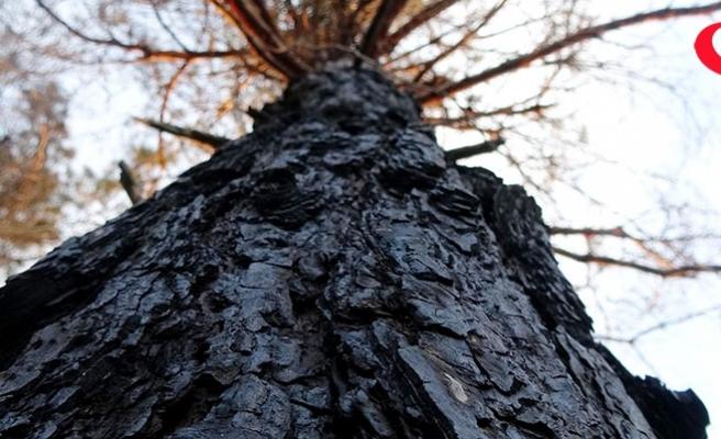 Çamburnu ormanından kötü haber