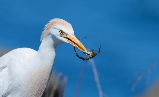 Doğu Karadeniz'de 10 yılda fotoğraflanan 338 kuş türü kitap oldu