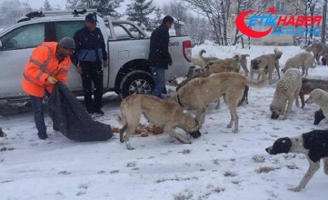 2 bin rakımlı yaylada aç kalan köpekleri zabıta besledi