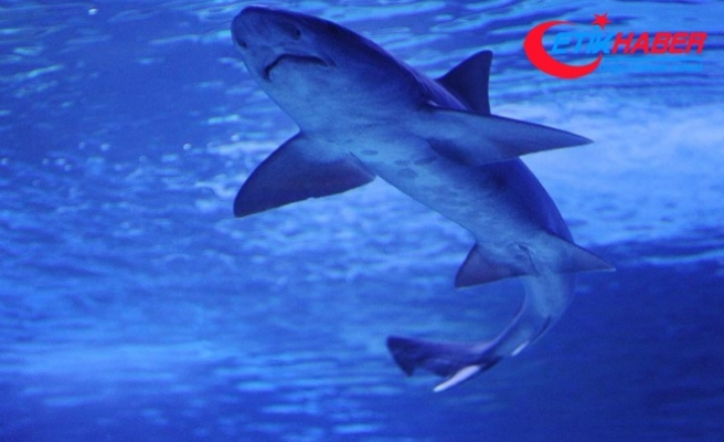Kosta Rika'da köpekbalığı saldırısı