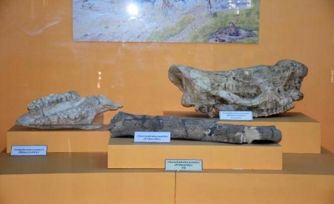 Arkeoloji Müzesi, 9 milyon yıl öncesine ışık tutuyor